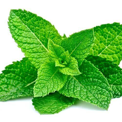 Enduro Mint Tea